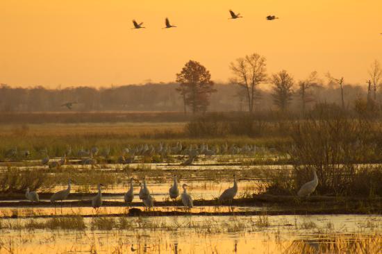 sunrise-at-crex-meadow