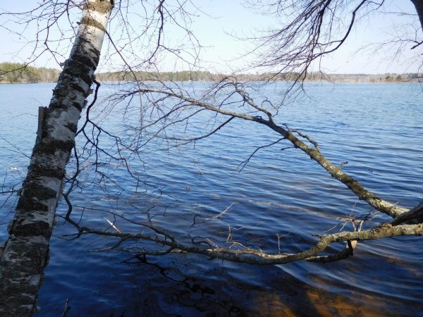 Webb Lake, MLS# 1504178