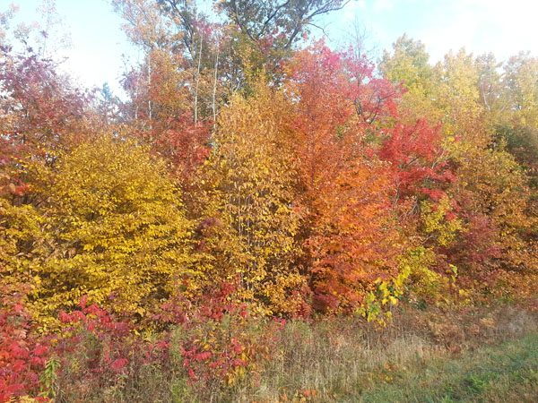 Yellow orange red and brown fall trees