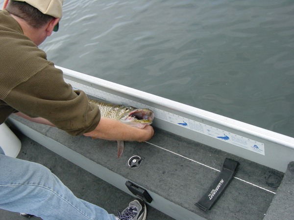 Measure your trophy for future fish stories