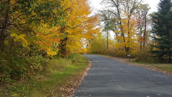 Bright yellow and green leaves on trees by paved path