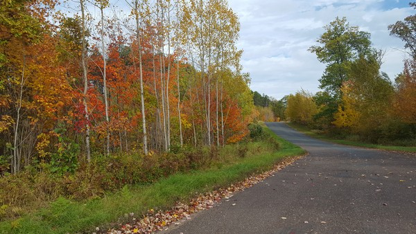 Fall trees next to bright green grass and paved road