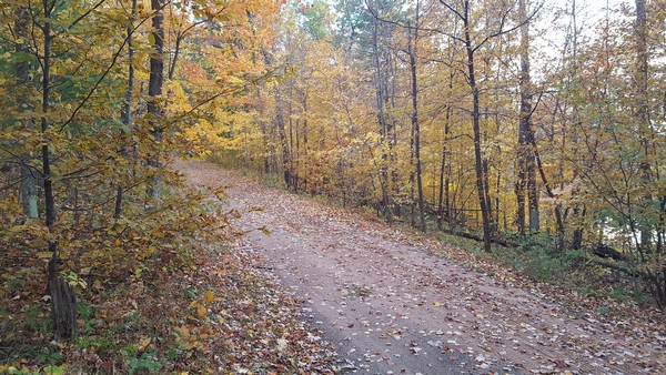 Dirt forest path littered with fallen leaves
